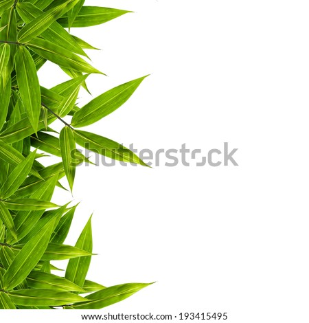 bamboo leaves isolated on white background, design for border, include clipping path - stock photo