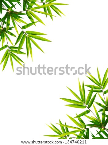 bamboo leaves isolated on white background with clipping path - stock photo