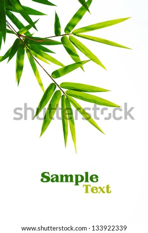 Bamboo leaves isolated on white wiht sample text. - stock photo