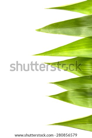Bamboo leaves on white.