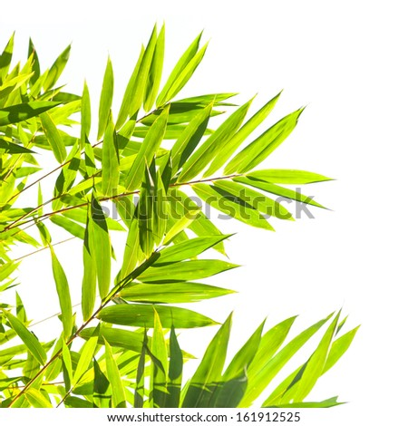 Bamboo leaves on white background - stock photo