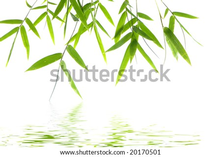 Bamboo leaves reflected in water
