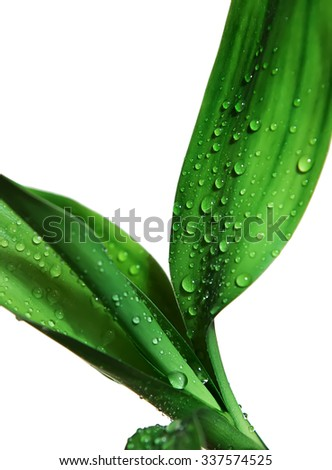 Bamboo leaves with drops - stock photo