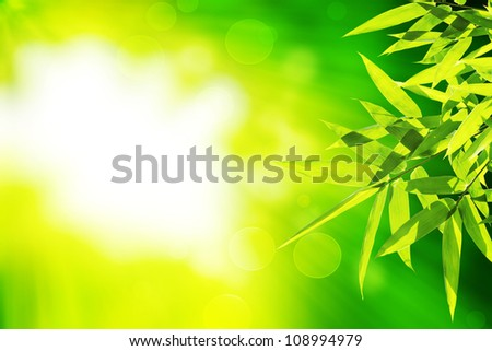 Bamboo leaves with green background