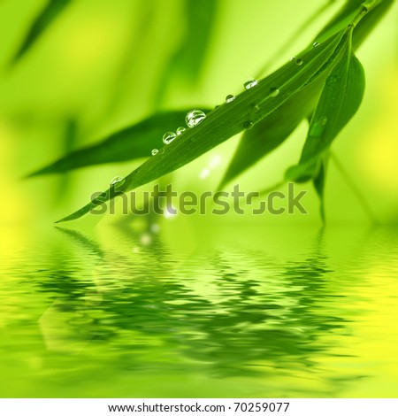 Bamboo leaves with water drops on a white background - stock photo