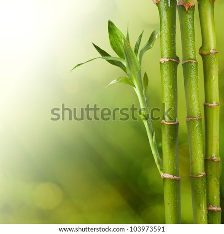 Bamboo on bokeh summer background. Concept for relaxation - stock photo