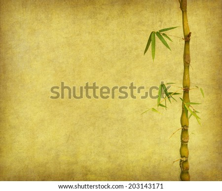 bamboo on old grunge paper texture background - stock photo