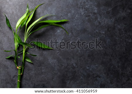 Bamboo plant over stone background. View with copy space - stock photo