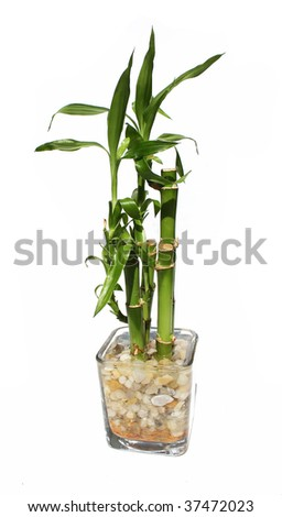 Bamboo planter - stock photo
