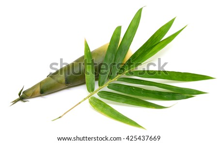 Bamboo shoot with leaves isolated on white background