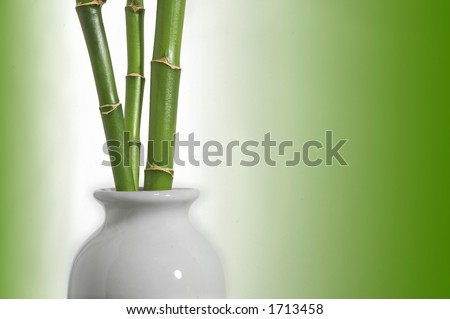 Bamboo shoots in white vase with green glow on a white background
