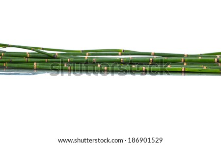 Bamboo stalks - stock photo