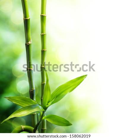 bamboo stalks and light beam - stock photo