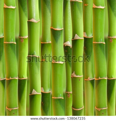 Bamboo stalks background. - stock photo