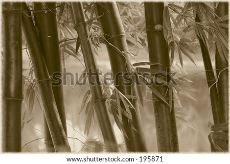 Bamboo stalks rendered as an old photo in sepia. - stock photo