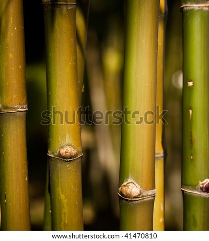 Bamboo Stands Under The Sunlight - stock photo
