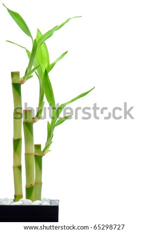 Bamboo stems and leaves in an Asian inspired setting isolated on white