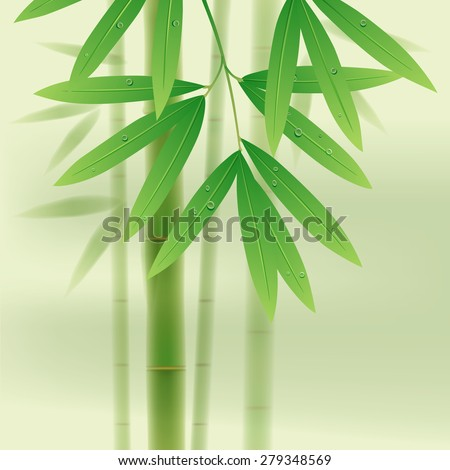 Bamboo stems and leaves on light green background - stock photo