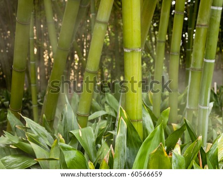 Bamboo stems in forest surrounded by mist