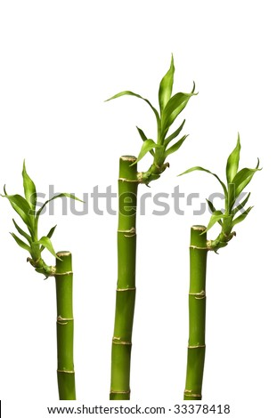 Bamboo sticks isolated on white. It has a clipping path. - stock photo
