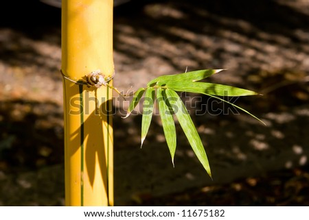 Bamboo Stock with single new branch growing - stock photo