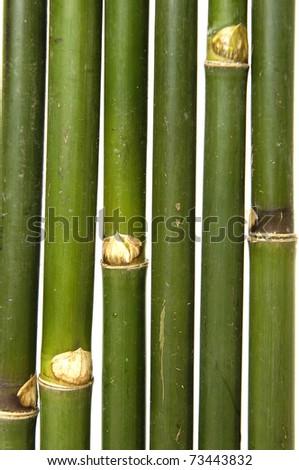 Bamboo thin Jungle - stock photo