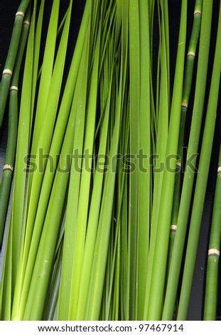 Bamboo thin Jungle and plant - nature background - stock photo