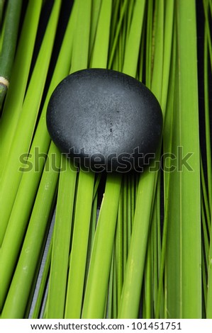 Bamboo thin Jungle and plant with black - nature background - stock photo