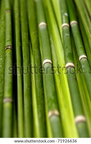 Bamboo thin Jungle- nature background - stock photo