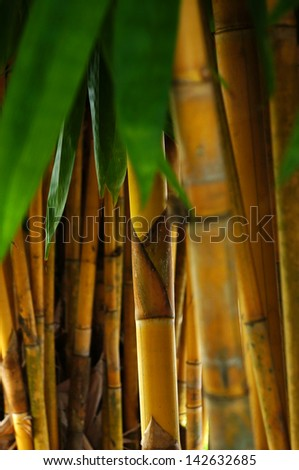 Bamboo tree and leaves - stock photo