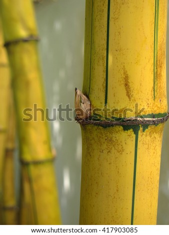 Bamboo tree close up