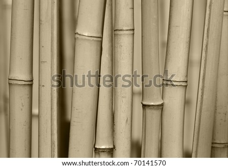 Bamboo trees forest background close-up. - stock photo