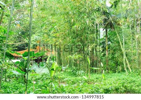 bamboo trees in garden - stock photo