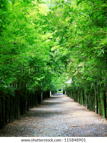 Bamboo tunnel. - stock photo