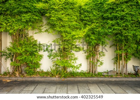 bamboo wall and Cement Floor. green leaf and foot wall for background and Copy Space - stock photo