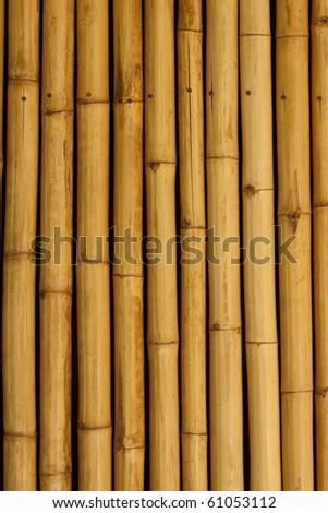 Bamboo wall/background - stock photo