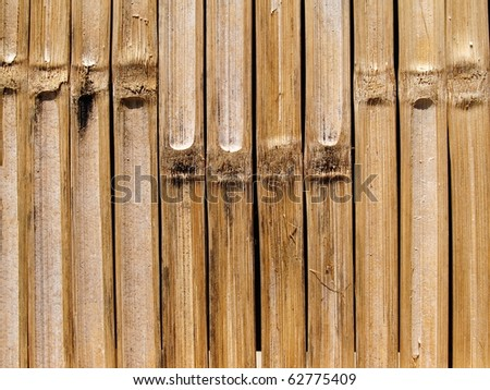 bamboo wall nature background