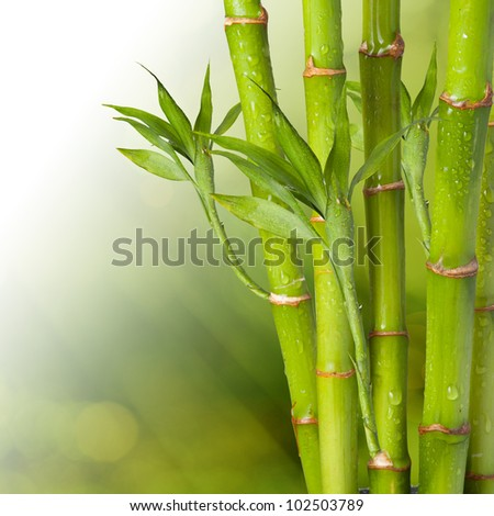Bamboo with beautiful summer background - stock photo