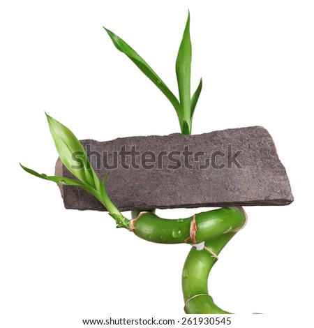 Bamboo with blank label - stock photo