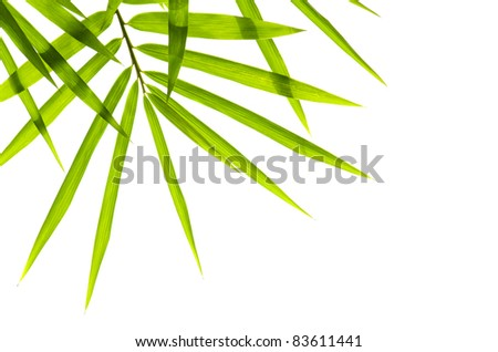bamboo with isolated white background - stock photo