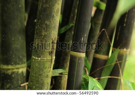 bamboo with lizard - stock photo