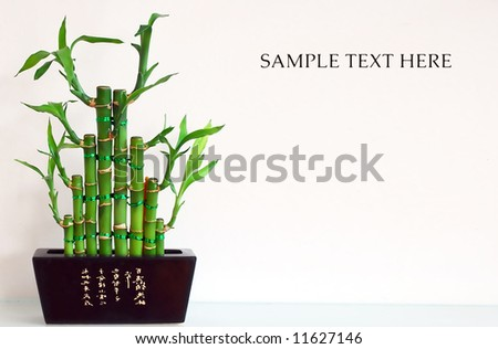 Bamboo with place for your text - stock photo