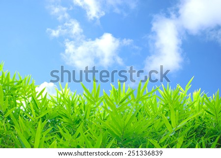 bamboos on  blue sky - stock photo