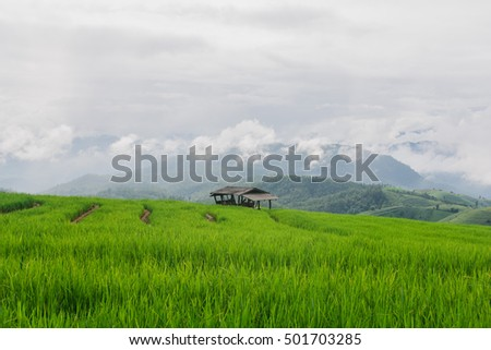 Ban Papongpieng Rice Terraces, Chiang Mai, North of Thailand,landscape with a single house,Rice terraces and foggy