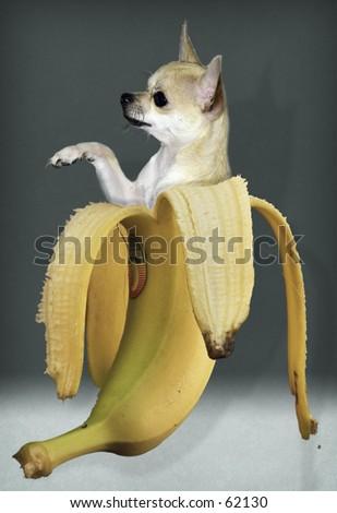 Banana Boy - stock photo