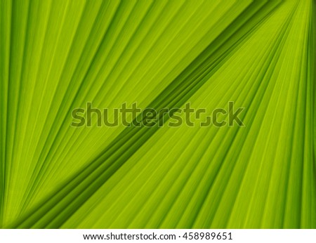 Banana green leaf texture background