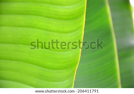 banana leaf and pattern