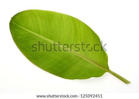 Banana leaf isolated on white - stock photo