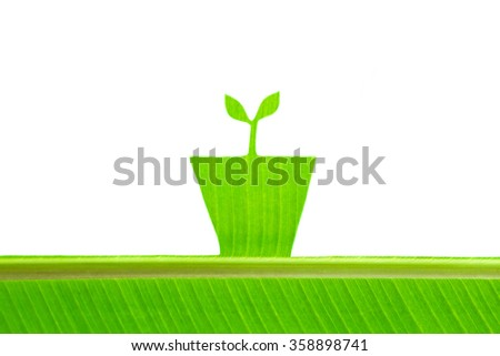 Banana leaf textured, draw sprout