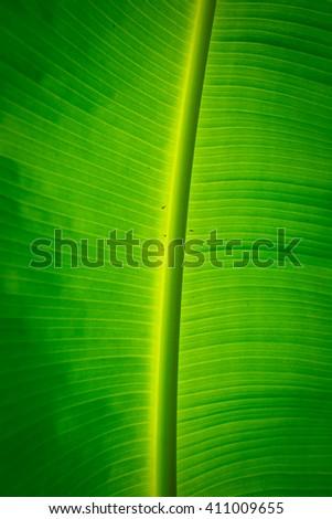Banana leaf with rain drop  - stock photo